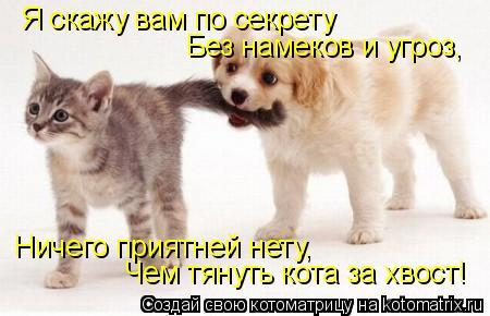 Котоматрица: Я скажу вам по секрету Без намеков и угроз, Ничего приятней нету, Ничего приятней нету, Чем тянуть кота за хвост!