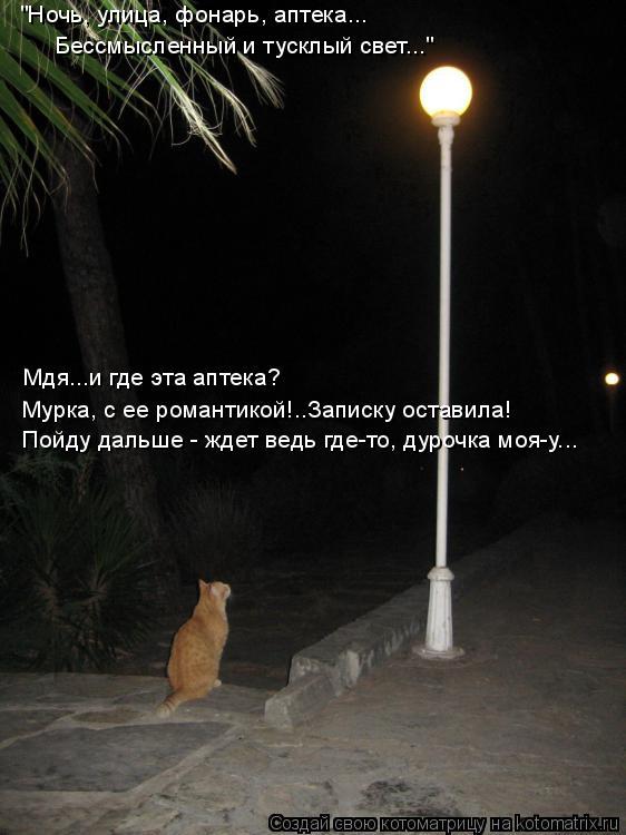 """Котоматрица: """"Ночь, улица, фонарь, аптека...  Бессмысленный и тусклый свет..."""" Мдя...и где эта аптека? Мурка, с ее романтикой!..Записку оставила! Пойду дальше -"""