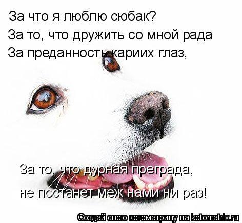 Котоматрица: За что я люблю сюбак? За то, что дружить со мной рада За преданность кариих глаз, За то, что дурная преграда, не постанет меж нами ни раз!