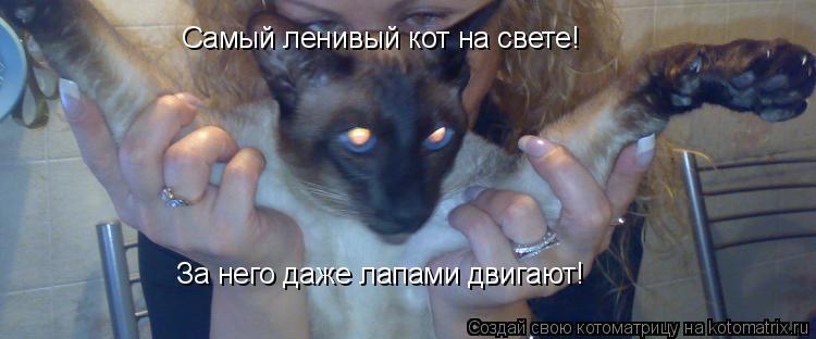Котоматрица: Самый ленивый кот на свете! За него даже лапами двигают!
