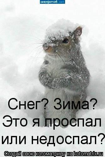 Котоматрица: Снег? Зима? Это я проспал  или недоспал?