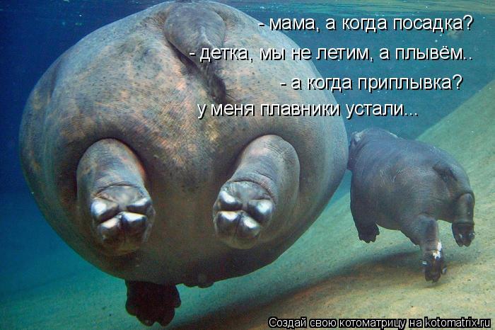 Котоматрица: - мама, а когда посадка? - детка, мы не летим, а плывём.. - а когда приплывка? у меня плавники устали...
