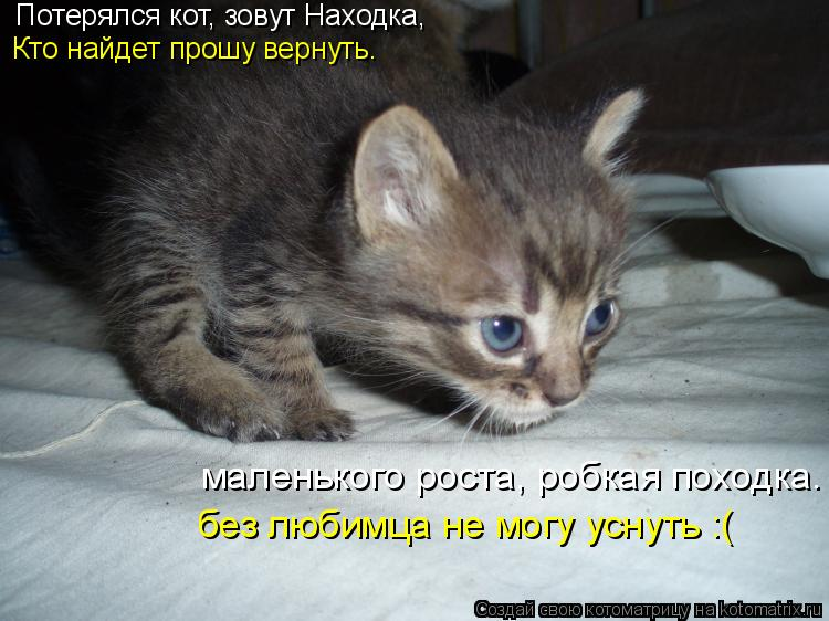 Котоматрица: Потерялся кот, зовут Находка, Кто найдет прошу вернуть. маленького роста, робкая походка. без любимца не могу уснуть :(