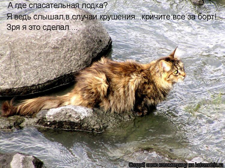 Часть 29.  Узнай какая ты кошка.  Выбор кошки по знакам зодиака.