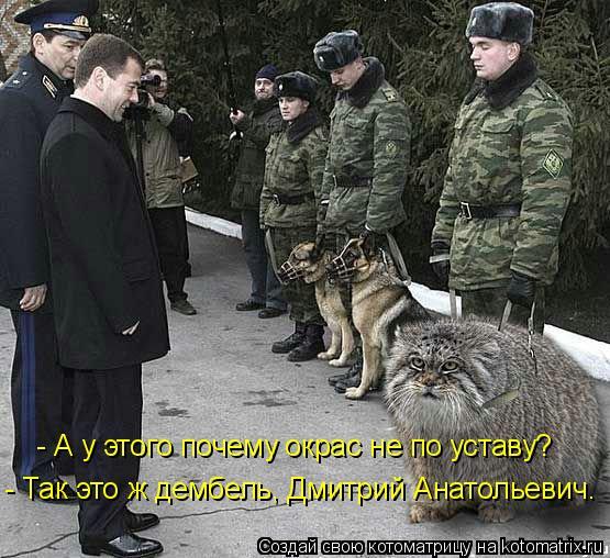 Котоматрица: - А у этого почему окрас не по уставу? - Так это ж дембель, Дмитрий Анатольевич.
