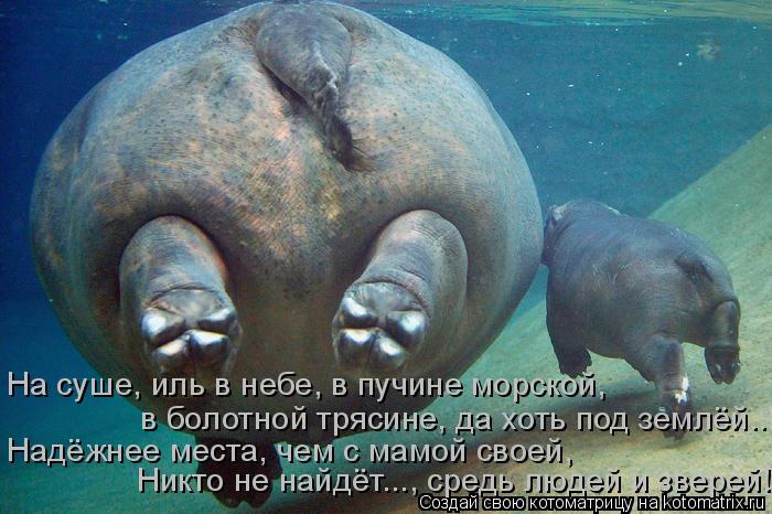 Котоматрица: На суше, иль в небе, в пучине морской, в болотной трясине, да хоть под землёй..! Надёжнее места, чем с мамой своей, Никто не найдёт..., средь люде
