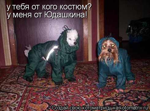 Котоматрица: у тебя от кого костюм? у меня от Юдашкина!