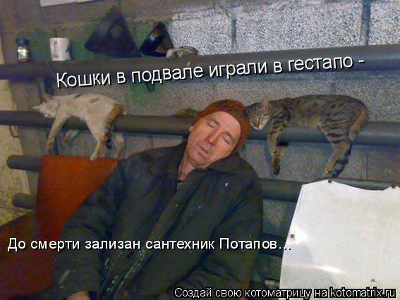 Котоматрица: Кошки в подвале играли в гестапо -   До смерти зализан сантехник Потапов...