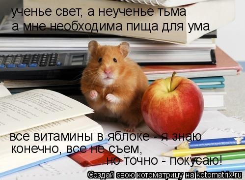Котоматрица: ученье свет, а неученье тьма а мне необходима пища для ума все витамины в яблоке - я знаю конечно, все не съем, но точно - покусаю!