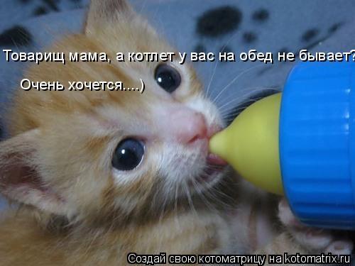 Котоматрица: Товарищ мама, а котлет у вас на обед не бывает? Очень хочется....)