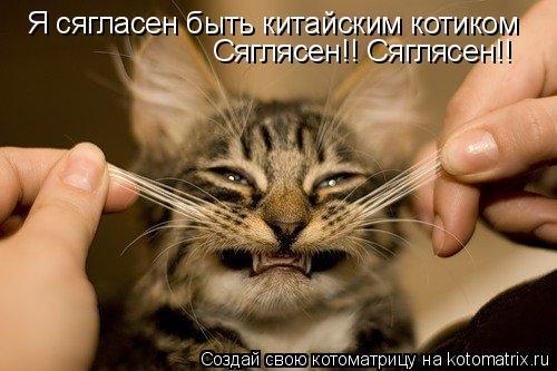 Котоматрица: Я сягласен быть китайским котиком Сяглясен!! Сяглясен!!