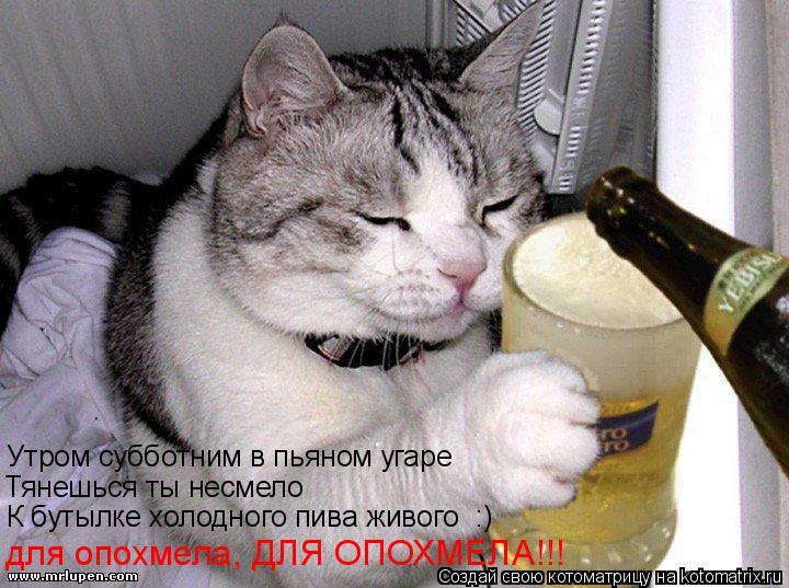 Котоматрица: Утром субботним в пьяном угаре Тянешься ты несмело К бутылке холодного пива живого  :) для опохмела, ДЛЯ ОПОХМЕЛА!!!