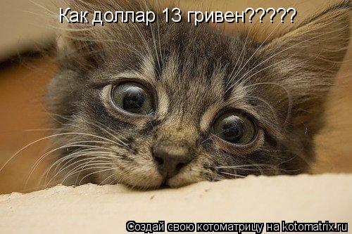 Котоматрица: Как доллар 13 гривен?????