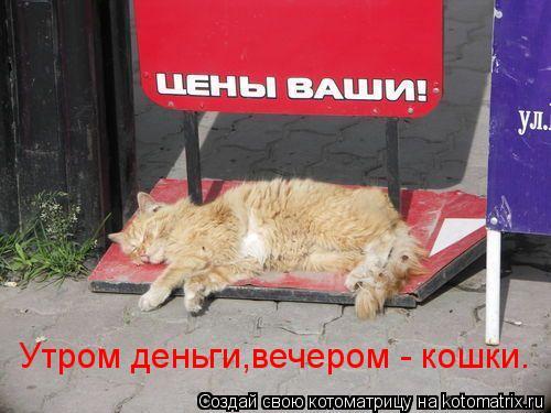 Котоматрица: Утром деньги,вечером - кошки.