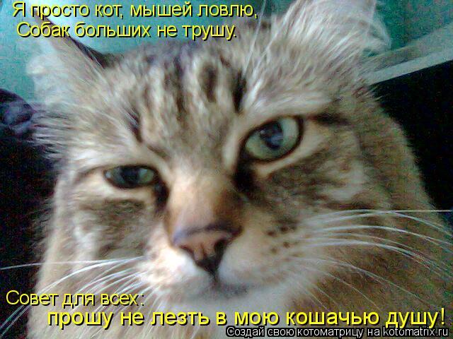 Котоматрица: Я просто кот, мышей ловлю,  Собак больших не трушу. Совет для всех:  прошу не лезть в мою кошачью душу!