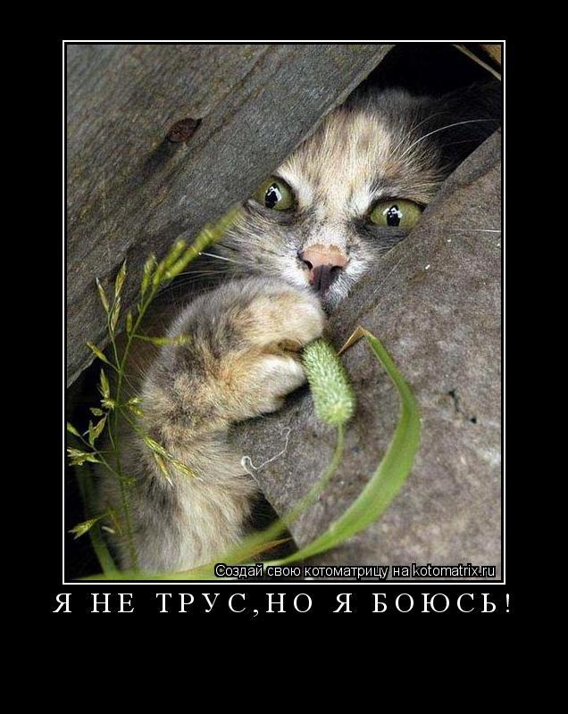 Котоматрица: Я не трус,но я боюсь!