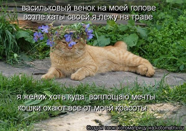 Котоматрица: васильковый венок на моей голове возле хаты своей я лежу на траве я жених хоть куда, воплощаю мечты  кошки охают все от моей красоты