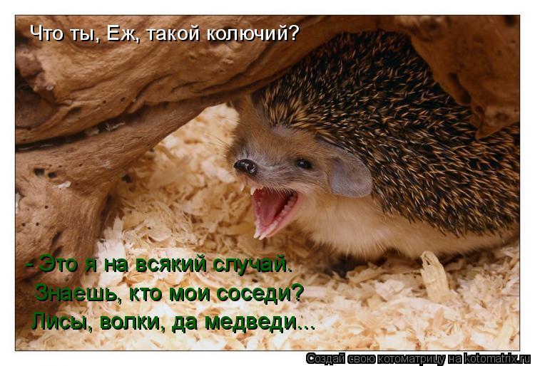 Котоматрица: Что ты, Еж, такой колючий?  - Это я на всякий случай.  Знаешь, кто мои соседи?  Лисы, волки, да медведи...