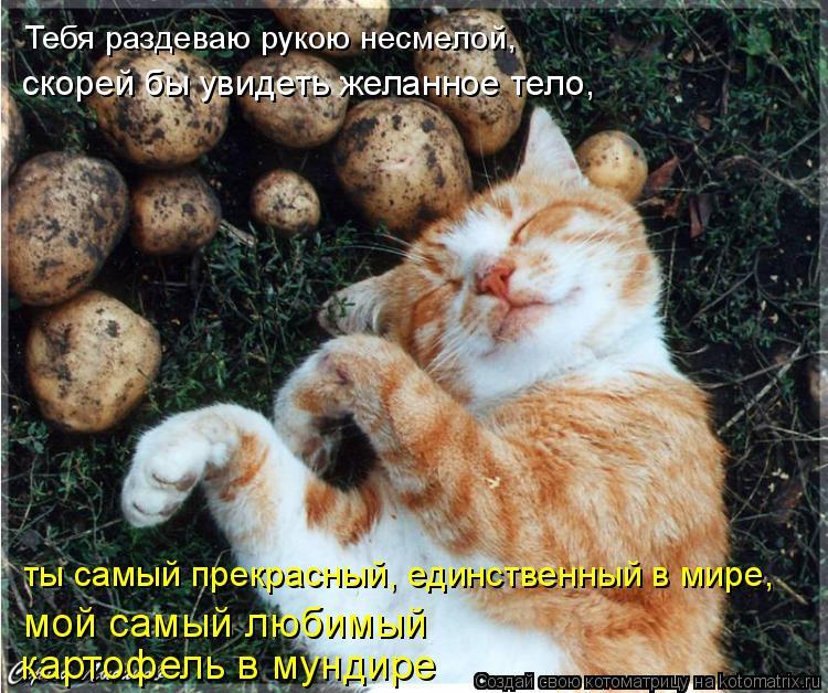 Котоматрица: Тебя раздеваю рукою несмелой,  скорей бы увидеть желанное тело,  ты самый прекрасный, единственный в мире, мой самый любимый  картофель в мун