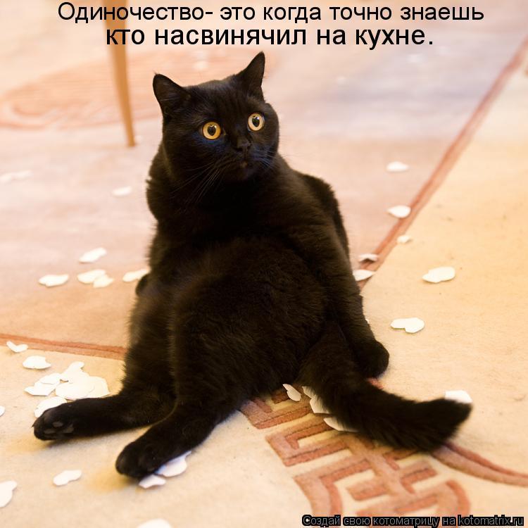 Котоматрица: Одиночество- это когда точно знаешь   кто насвинячил на кухне.