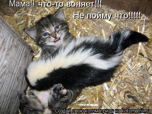 Котоматрица: Мама!! что-то воняет!!! Не пойму что!!!!!