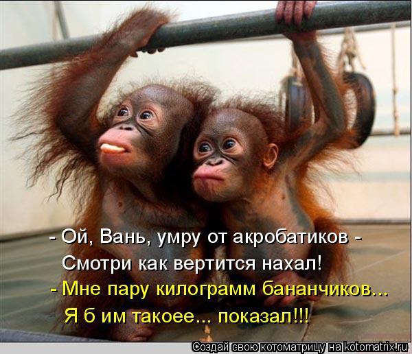 Котоматрица: - Ой, Вань, умру от акробатиков - Смотри как вертится нахал! - Мне пару килограмм бананчиков... Я б им такоее... показал!!!