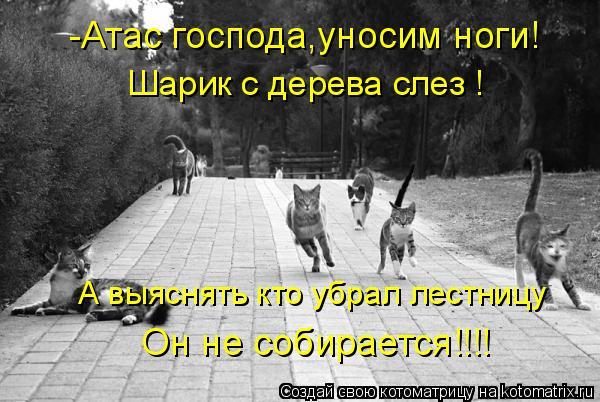 Котоматрица: -Атас господа,уносим ноги! Шарик с дерева слез ! А выяснять кто убрал лестницу  Он не собирается!!!!