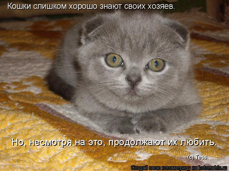Котоматрица: Кошки слишком хорошо знают своих хозяев. Но, несмотря на это, продолжают их любить. (с) Tess.