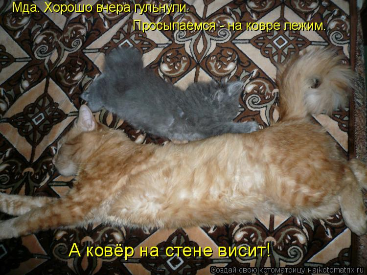 Котоматрица: Просыпаемся - на ковре лежим. Мда. Хорошо вчера гульнули. А ковёр на стене висит!