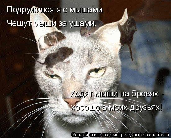 Котоматрица: Подружился я с мышами. Чешут мыши за ушами. Ходят мыши на бровях - хорошо в моих друзьях!