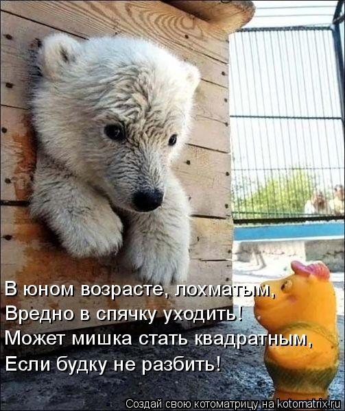 Котоматрица: В юном возрасте, лохматым, Вредно в спячку уходить! Может мишка стать квадратным, Если будку не разбить!