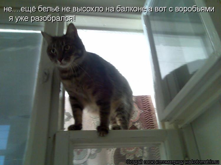 Котоматрица: не....ещё бельё не высохло на балконе,а вот с воробьями я уже разобрался!