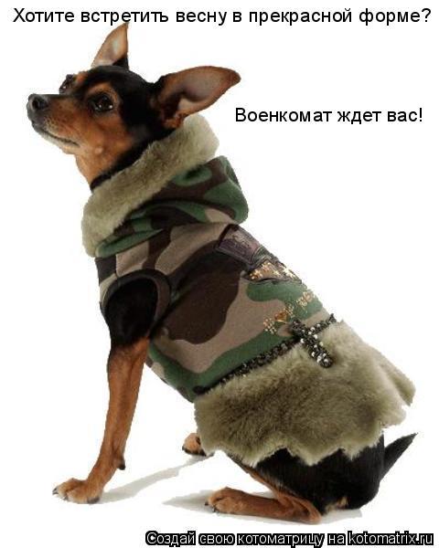 Котоматрица: Хотите встретить весну в прекрасной форме? Военкомат ждет вас!