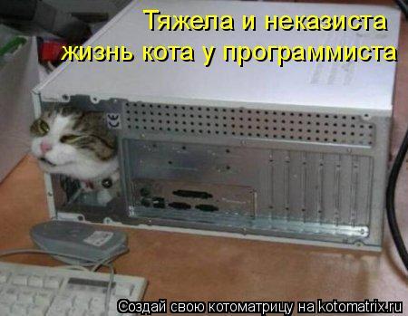 Котоматрица: Тяжела и неказиста жизнь кота у программиста