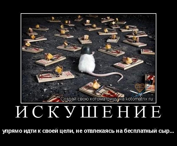 Котоматрица: искушение упрямо идти к своей цели, не отвлекаясь на бесплатный сыр...