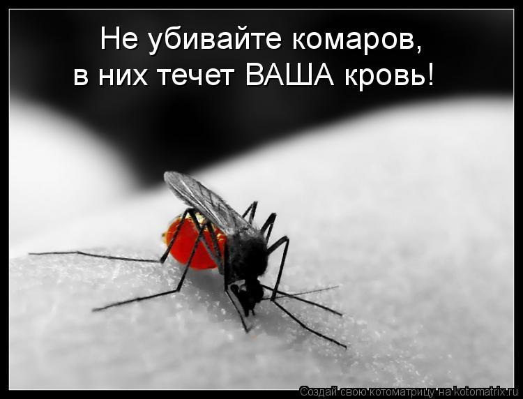 Котоматрица: Не убивайте комаров,  в них течет ВАША кровь!