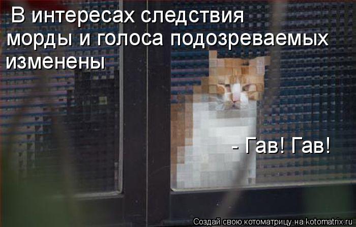 Котоматрица: В интересах следствия морды и голоса подозреваемых  изменены - Гав! Гав!