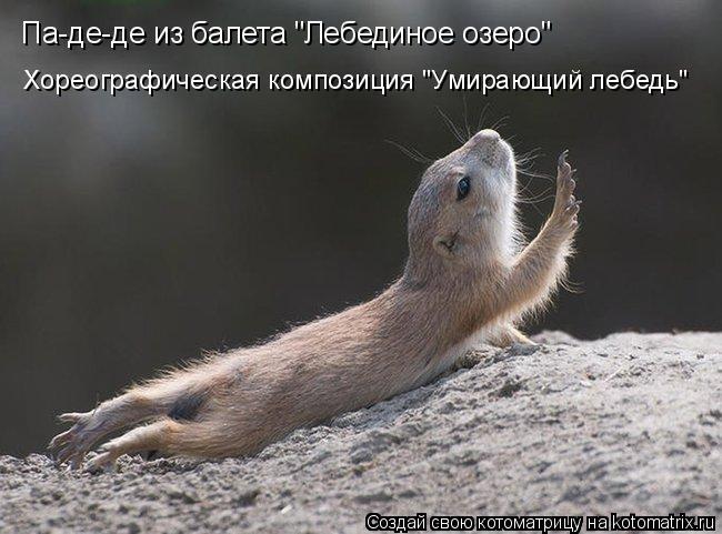 """Котоматрица: Па-де-де из балета """"Лебединое озеро"""" Хореографическая композиция """"Умирающий лебедь"""""""