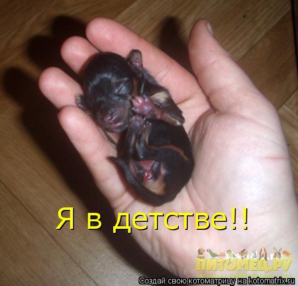 сколько спит щенок йорка в 2 месяца банкротства физического лица