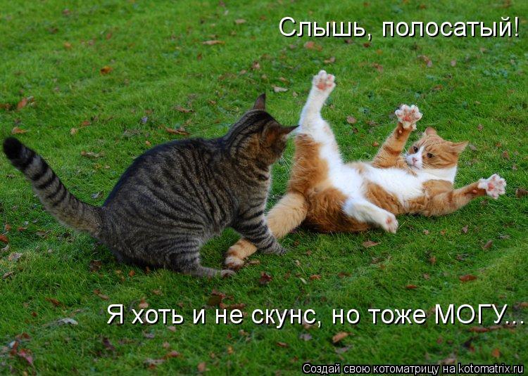 Котоматрица: Я хоть и не скунс, но тоже МОГУ... Слышь, полосатый!