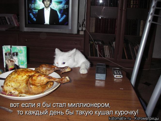 Котоматрица: вот если я бы стал миллионером, то каждый день бы такую кушал курочку!