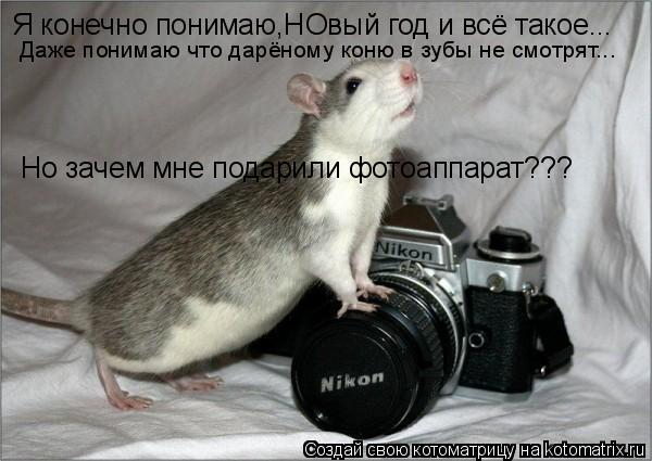 Котоматрица: Я конечно понимаю,НОвый год и всё такое... Но зачем мне подарили фотоаппарат??? Даже понимаю что дарёному коню в зубы не смотрят...