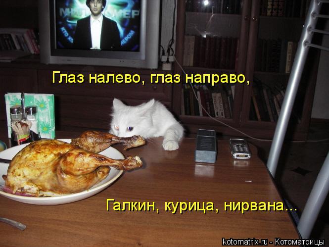 Котоматрица: Глаз налево, глаз направо, Галкин, курица, нирвана...