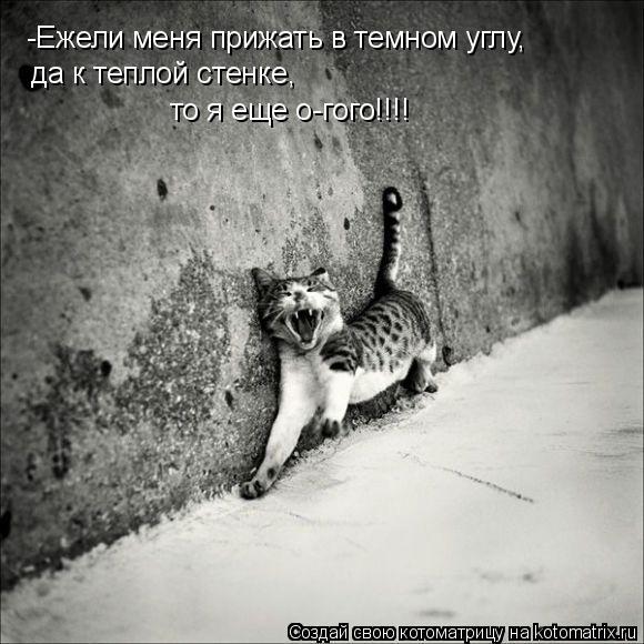 Котоматрица: -Ежели меня прижать в темном углу, да к теплой стенке, то я еще о-гого!!!!