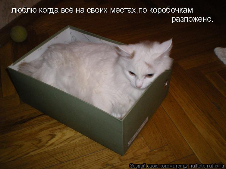 Котоматрица: люблю когда всё на своих местах,по коробочкам разложено.