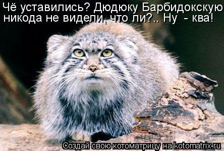 Котоматрица: Чё уставились? Дюдюку Барбидокскую никода не видели, что ли?.. Ну  - ква!