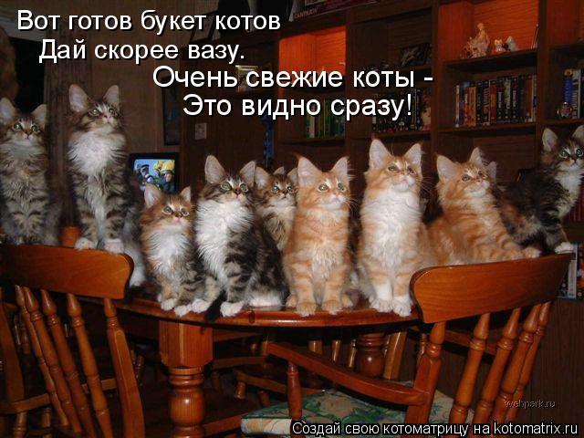 Котоматрица: Вот готов букет котов Дай скорее вазу. Очень свежие коты - Это видно сразу!