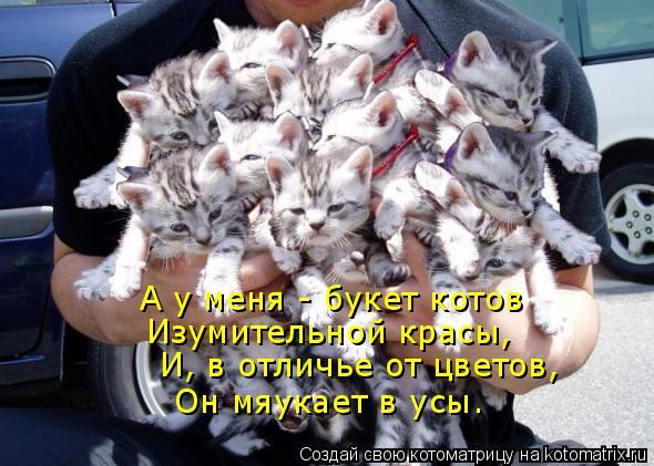 Котоматрица: А у меня - букет котов Изумительной красы, И, в отличье от цветов, Он мяукает в усы.