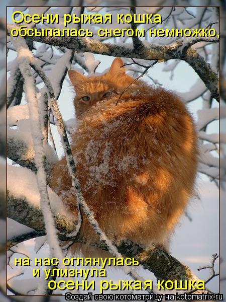 Котоматрица: Осени рыжая кошка обсыпалась снегом немножко, на нас оглянулась и улизнула осени рыжая кошка