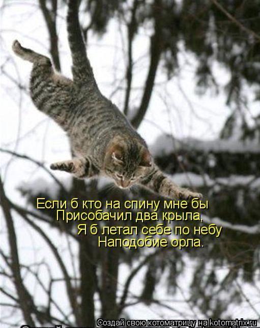 Котоматрица: Если б кто на спину мне бы Присобачил два крыла, Я б летал себе по небу Наподобие орла.